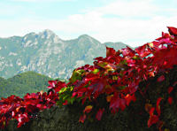 Autumn Colors on Stone Wall in Scala200px