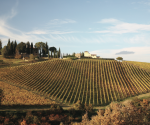 Drink Italia! the best Tuscan red wines