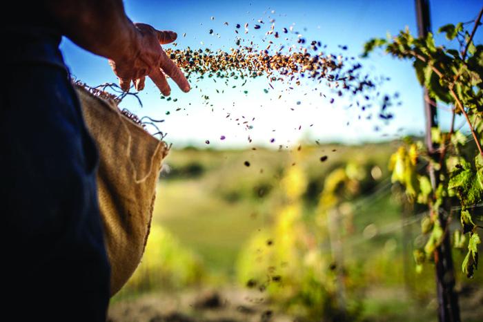 *FeedingTheSoil©Lucas-Photocrowd.com