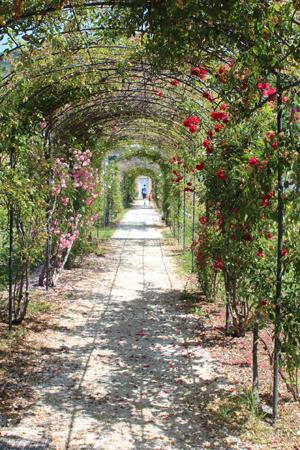 *rose avenue