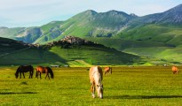 Sibillini mountains, horses