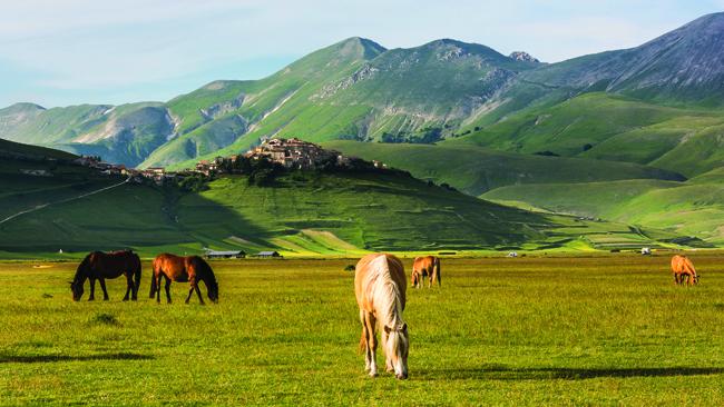 Sibillini mountains, horses