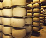Two of Italy's most famous cheeses are being produced with milk from poorly treated cows