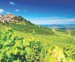 Drink Italia! Nebbiolo wines