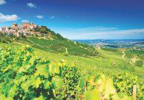 Barolo vineyard Piedmont italy
