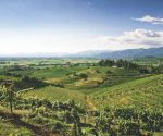 Drink Italia: white wines of Friuli