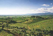 Vineyards in Friuli