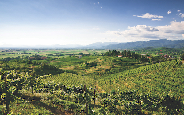 Vineyards in Friuli