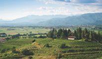 Collio zone Friuli-Venezia-Giulia