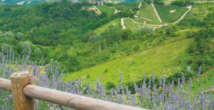 Summer landscape with vineyards in Monferrato (Piedmont, Italy)