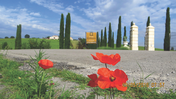 Bevagna and Cannara wine estate in Umbria