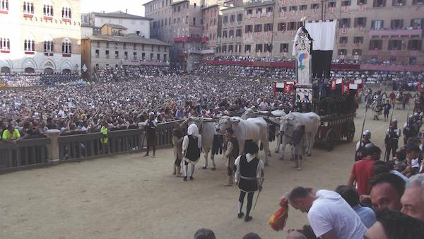 Chianti bulls at Siena Palio