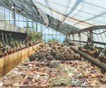 Viewpoint: Giardini Esotici Pallanca