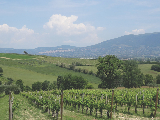 View from Cantina Diogini Umbria