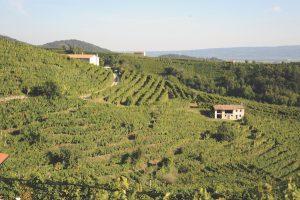 Prosecco DOCG area Italy
