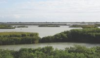 Looking across the reeds and islands of Sacca di Goro, Po Delta, Italy