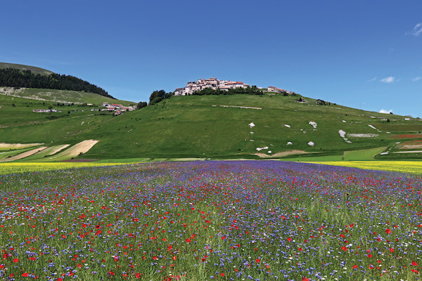 Field of Flowers, Castelluccio, Italy