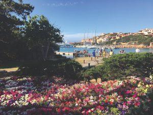 Flowers in Porto Cervo, Sardinia