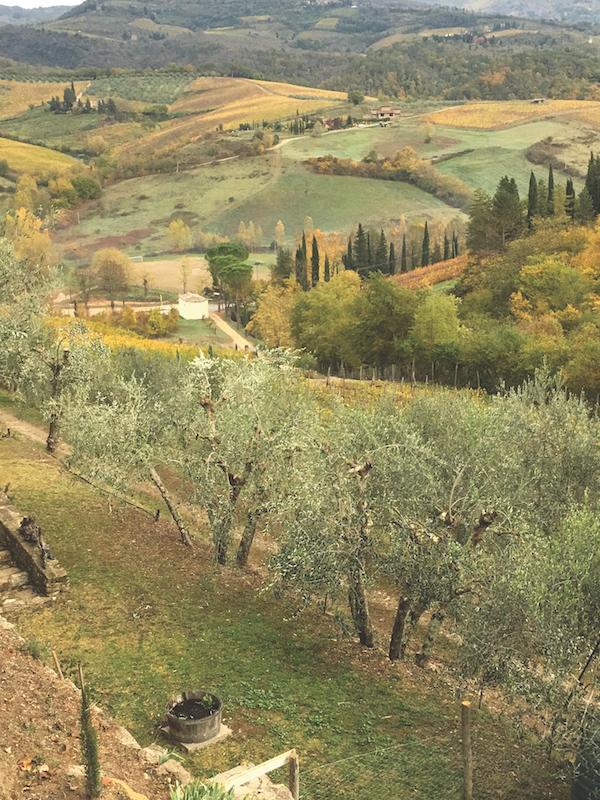 Terre di Baccio, Greve in Chianti