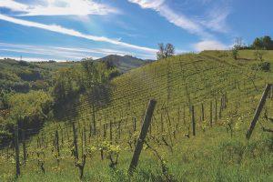 Vineyards in Oltrepo Pavese
