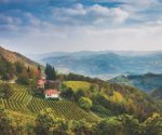 Drink Italia! Piedmont white wines