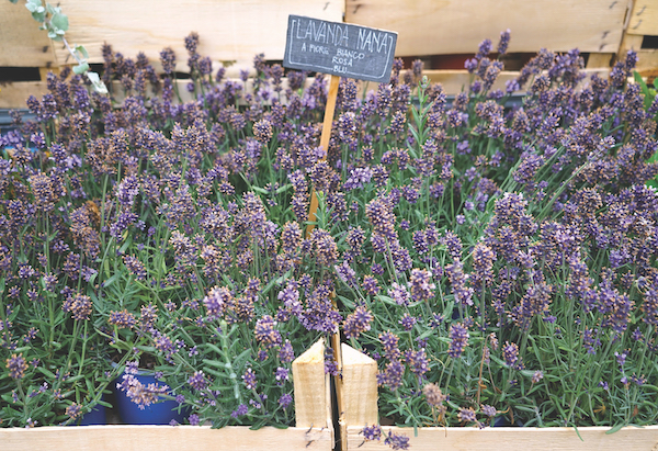 lavender on sale in Italy